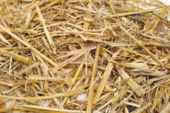 Straw Royalty Free Stock Image