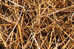 Straw. Harvested pile of yellow straws Stock Images