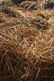 Straw. Closeup of straw used as animal-feed on a farm royalty free stock images