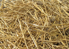 Straw. Scattered in a pile Royalty Free Stock Photography