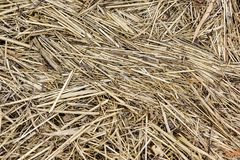 Straw Abstract Background med textur Arkivfoto