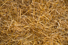 Straw Abstract Texture. Abstract texture of straw or hay in color showing a very simple image that would make a great background for copyspace stock photo