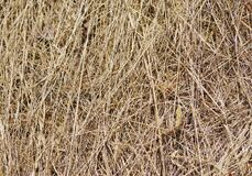 Straw in a haystack, close-up image. Yellow hay straw background.