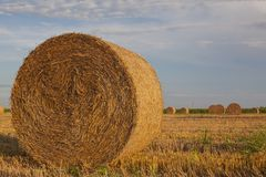 Straw in the agriculture field stock photos
