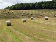 Straw ales on a field Royalty Free Stock Image
