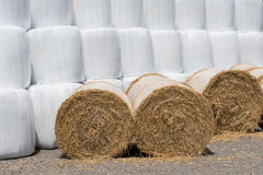 Straw as animal food foiled into white foil.  Stock Photography