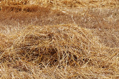 Straw as Background Stock Photos