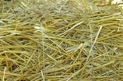 Straw as a background Royalty Free Stock Photography