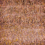 Straw as textured background Royalty Free Stock Image