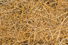 Straw background Stock Photography