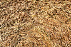 Straw background. Hay texture - surface of hay bale with circular structure Royalty Free Stock Images