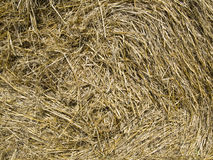 Straw Background Stock Images