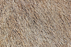 Straw background Stock Image