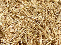Straw Background. Background texture of straw stack royalty free stock photos