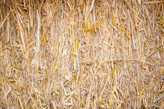 Straw background. Close up of straw background texture Stock Images