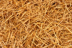 Straw  background. Close up golden straw for background Stock Photos