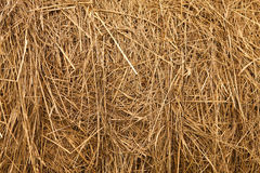 Straw background. A golden dry straw background Royalty Free Stock Photo
