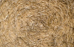 Straw background. Abstrack texture close up golden straw for background Stock Image