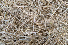 Straw. Background  color asian autumn Stock Images