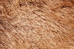 Straw Background Stock Photos
