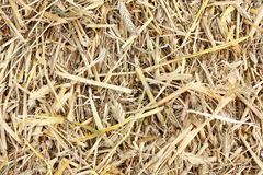 Straw background. Golden autumn straw country natural background Stock Photo