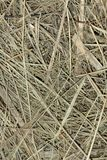 Straw background Royalty Free Stock Photo