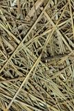 Straw background Royalty Free Stock Images