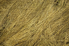 Straw texture. D background. Natural texture of dry straw. Dry grass hay closeup. Close up of dried piled hay from wheat and grass royalty free stock photography