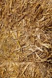 Straw background in the sun - hay and fodder for cattle. Straw background in the sun and  hay and fodder for cattle Stock Image