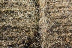 Straw Background Texture stockfoto