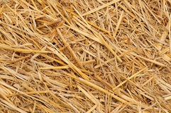 Straw background texture Stock Photography
