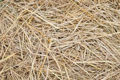 Straw background texture, abstract natural for design.  royalty free stock photography