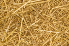 Straw Background texture close up. Showing the individual pieces of straw royalty free stock images