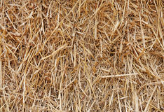 Straw background texture. Close up of straw background textures stock image