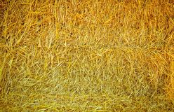 Straw background texture. With dramatic tone stock image