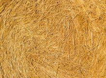 Straw background or texture. Golden color straw background or texture stock images