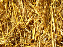Straw backgrounds. Golden straw in the ball stock photo