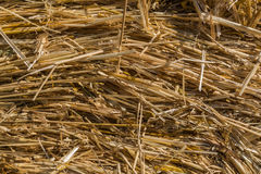 Straw backgrounds, summer field. Stock Photos