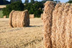 Straw bails in a corn field. Straw bails dotted around on corn stubble on a summers day royalty free stock images