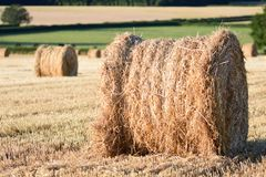 Straw bails in a corn field. Straw bails dotted around on corn stubble on a summers day stock images