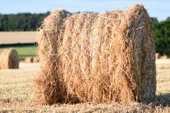 Straw bails in a corn field. Straw bails dotted around on corn stubble on a summers day stock photography