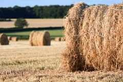 Straw bails in a corn field Stock Image