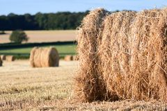 Straw bails in a corn field Stock Photo
