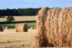 Straw bails in a corn field Royalty Free Stock Photography
