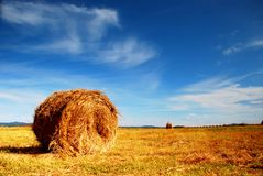 Straw bale. On the field Royalty Free Stock Images