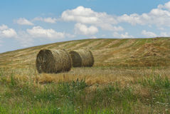 Straw bale. On the field. Hay Bales on a summer meadow Stock Photography