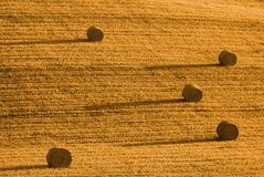 Straw bale. Four straw bales one tree in flied of wheat royalty free stock image