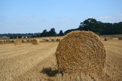 Straw Bale 2. Round Straw bales in a field Royalty Free Stock Photos
