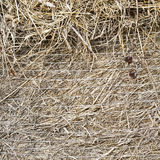 Straw bale,. Brown straw bale,  texture  background Stock Photo