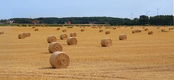 Field with straw bales after harvest. Straw bale architecture in crop filed summer royalty free stock photography